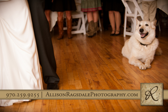 dog watches newlyweds first dance kendall mountain wedding reception