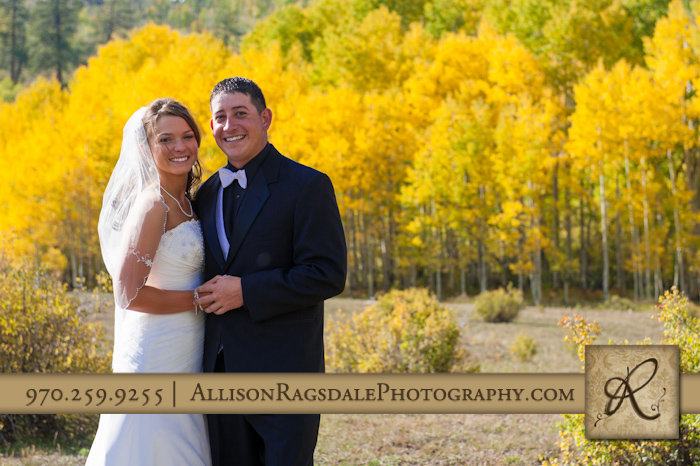 aspen trees yellow fall colors wedding picture