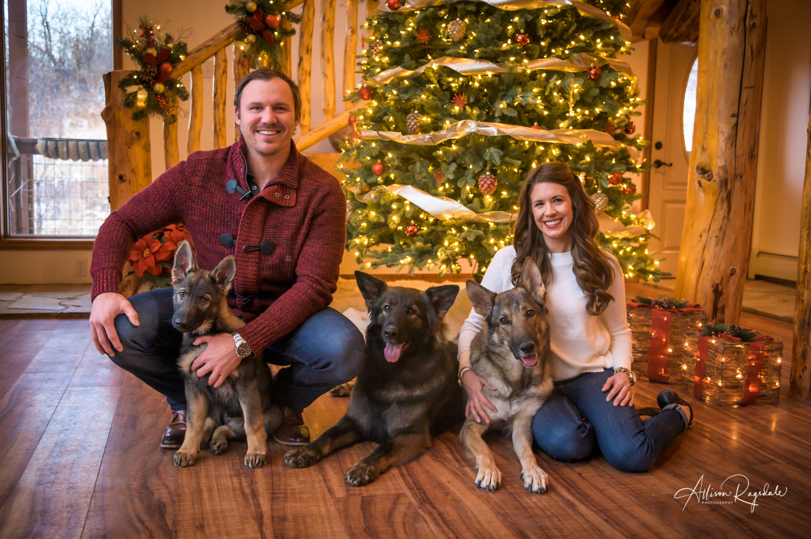 German shepherd christmas photo