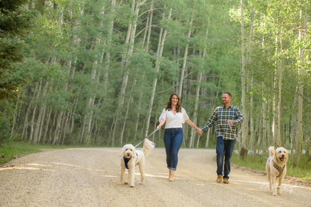 engagement session with dogs in the aspen trees of colorado